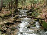 Minister_Creek_-_Allegheny_National_Forest.jpg